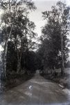 Wilson Pond Road (Greenville Area) by Bert Call