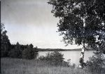 Honeymoon Point, Lake Wassookeag by Bert Call