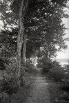Waldheim Path by Bert Call