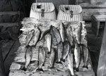 Fish by Bert Call