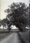 Willow Near Bridge in Abbot by Bert Call