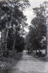 Wilson Pond Road by Bert Call