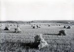 Grain Fields near Houlton by Bert Call