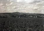 Potato Field near Patten by Bert Call