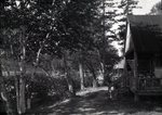 Path at Bradeen and Clifford's Camps Sept. 5, 1927 by Bert Call