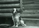 Call-Safford Family: MacCleod and Call's Dog by Bert Call