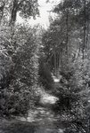 Path at Kidney Pond by Bert Call