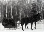 Group in Horse-Drawn Sleigh