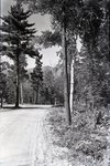 Road to Togue Pond by Bert Call