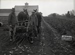 Armour Fertilizer Works, Presque Isle, Maine, September, 1936
