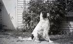 Dog by Bert Call