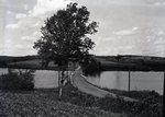 Abbott's Hill. Bridge and Trees
