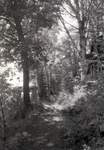 Dexter, Maine, wooded trail, outdoor scenes, woods, nature by Bert Call