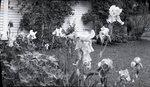 Maine Iris Garden by Bert Call