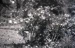 Maine Flower Garden Scene by Bert Call