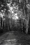 Bingham Area Woods by Bert Call