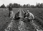Maine Agriculture, Potato Field by Bert Call