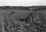 Maine Agriculture, Corn Shocks by Bert Call