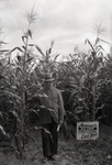 Maine Agriculture, Corn Field by Bert Call
