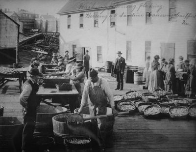 Washing, flaking herring at sardine cannery, Eastport, Maine