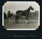 Bingenwood Jr. by Guy Kendall