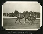 Chestnut Dillon by Guy Kendall