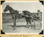 Chestnut Earl by Guy Kendall