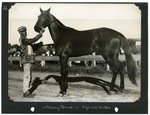 Nancy Arion — 3 yr old trotter by Guy Kendall