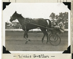 Willis Grattan by Guy Kendall