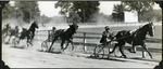 Sonny Hanover leading the .17 trotters by Guy Kendall