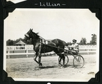 Lillian by Guy Kendall