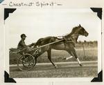 Chestnut Spirit by Guy Kendall