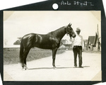 Arlo Stout