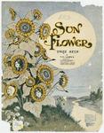 Sun-Flower : Three Step