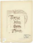 Turtle Dove : Lachtaeubchen