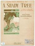 A Shady Tree : Waltz Ballad