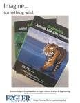 Imagine - Somewhere Wild