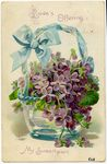 Basket of Violets Postcard