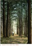 Woods at Ferry Beach Park Postcard