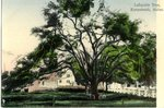Kennebunk, Maine, Lafayette Tree