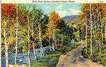 Katahdin Area River Road Birches Postcard