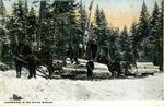 Lumbering in the Maine Woods Postcard