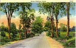 Maine Highway Scene    Postcard