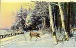 Winter Time in Maine    Postcard