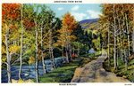 Greetings From Maine, River Birches Postcard