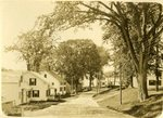 Roadside Scene and Shade Trees Postcard