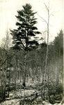 Woods Scene Postcard