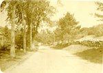 Rural Roadway Postcard