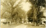 Shade Trees Postcard