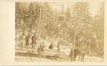 Logging Scene, Early 1920s, Maine